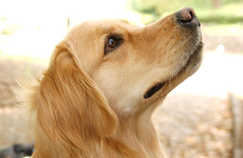 スマイヌのスタッフ犬moi