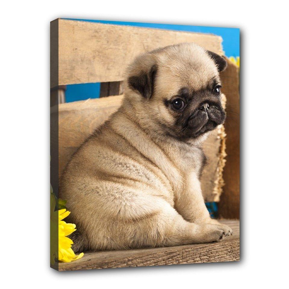 Cute Pug Dog Puppy Art Portrait 11 X14 Wrapped Canvas Print Wall