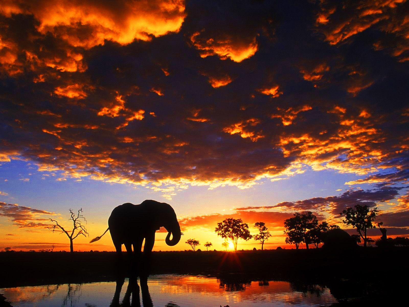 20 Amazing Elephants Wallpapers HD