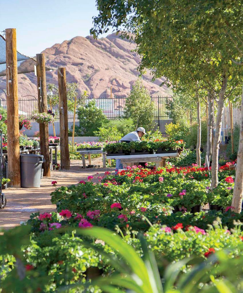 Arcadia Color Garden Puts Down Roots Phoenix Home
