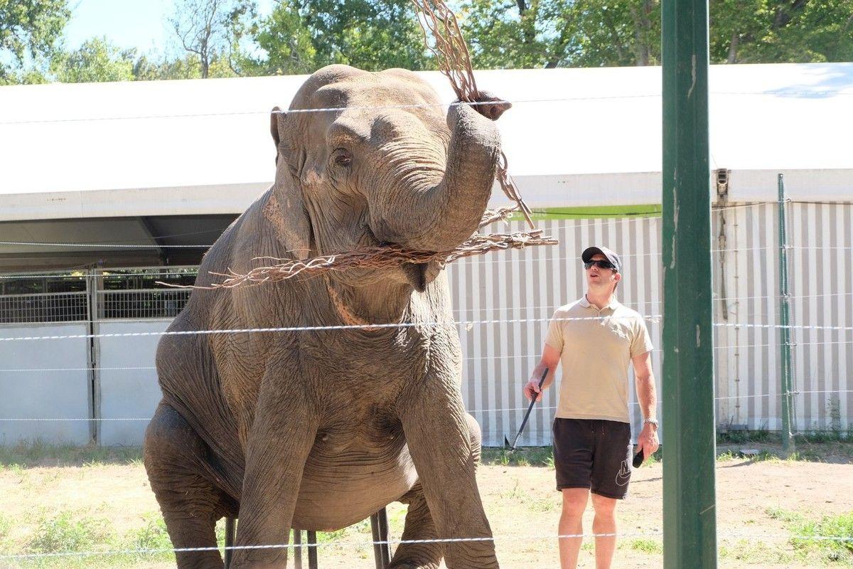 Show de l'éléphante, Parc Alexis Gruss