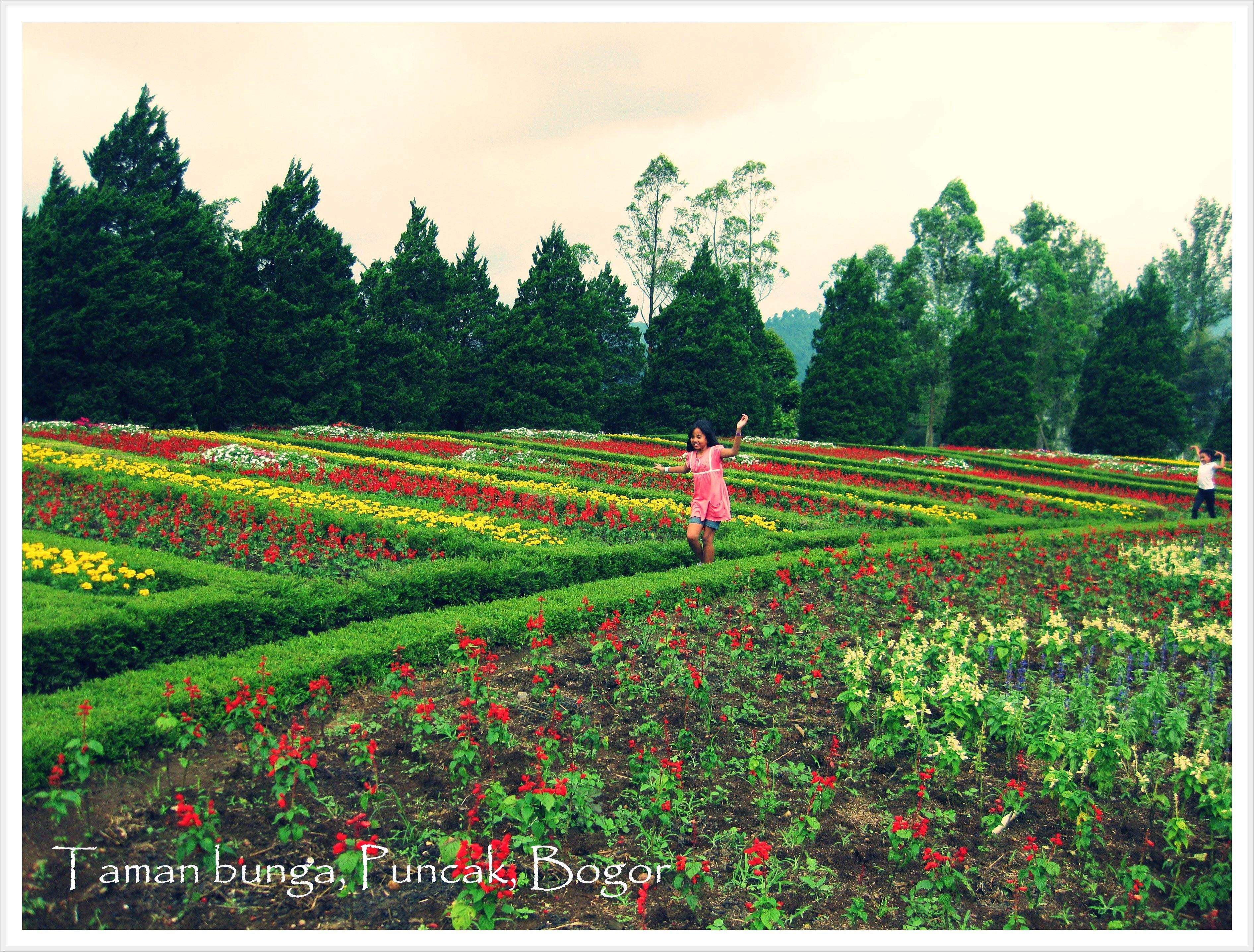 Taman Bunga Bogor Photo