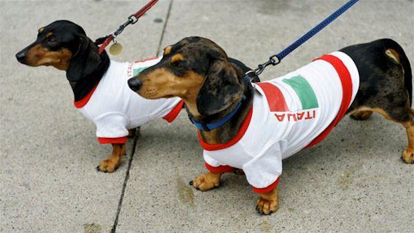 Doxie Pride Dachshund Dogs Dachshund Dog