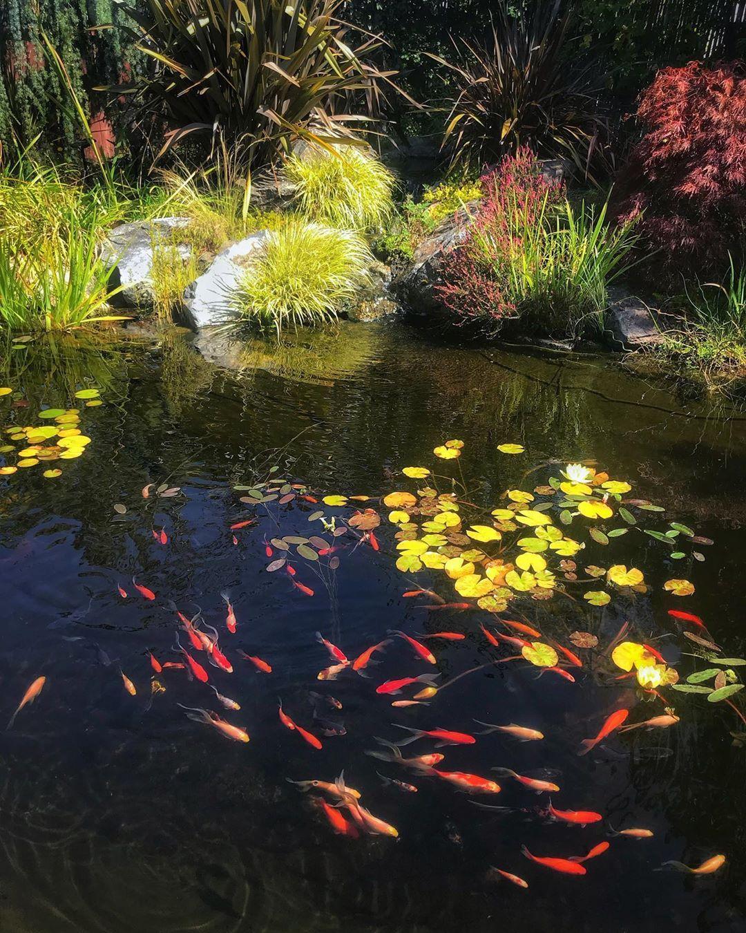 Garden Pond Suppliers Near Me