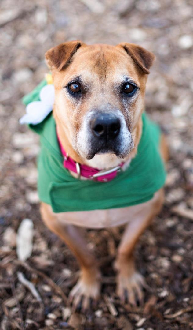 Adopt Vespa On With Images Senior Dog
