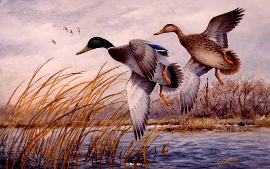 Картинки героев, открытки охота на птиц