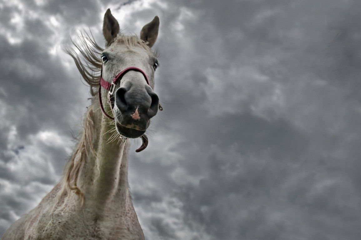 Horses Grey Bad Weather Cloud Skies Horse Hd Image