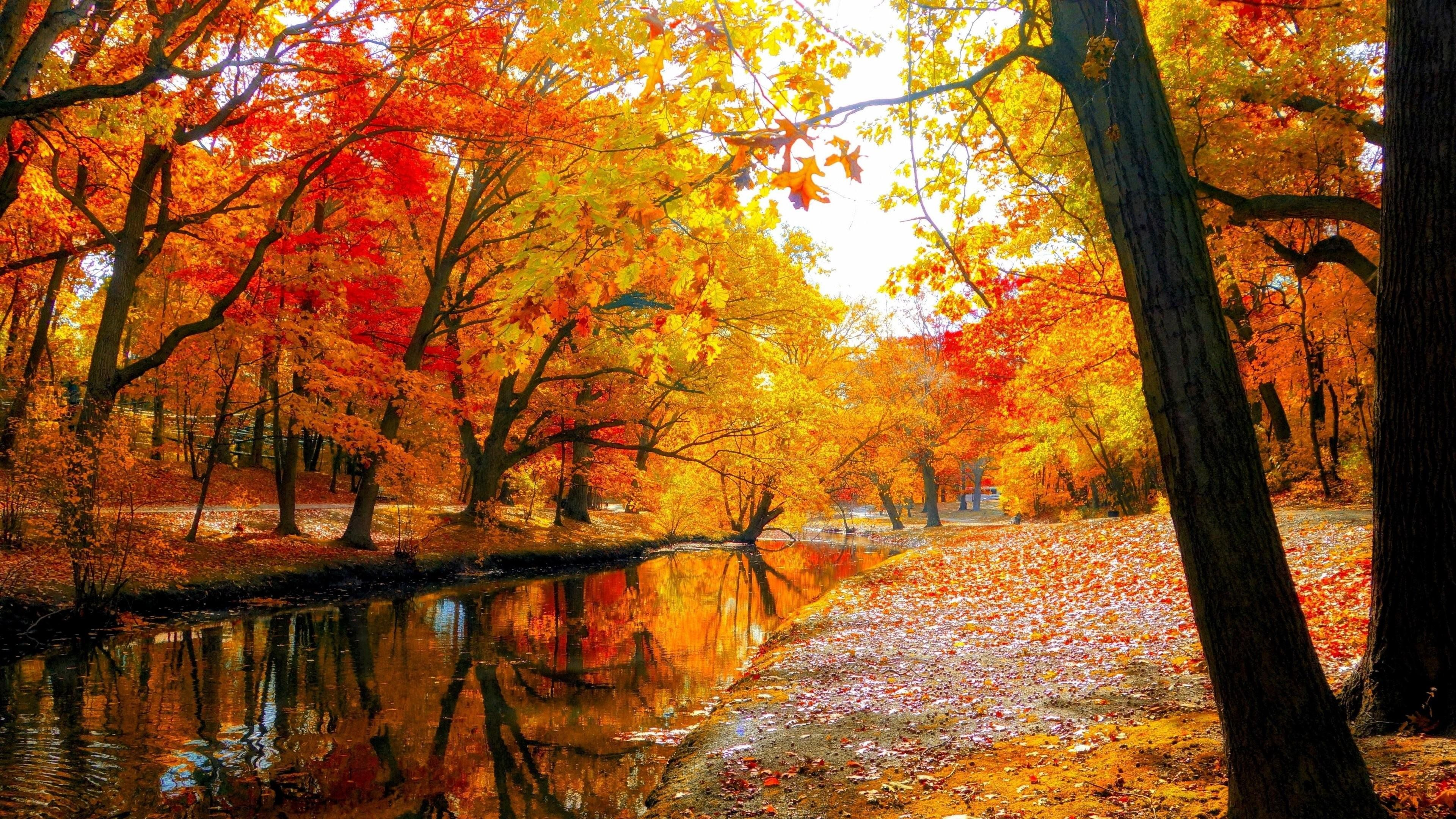 Autumn Fall Landscape Nature Tree Forest Leaf Lake Park 4k Wallpaper Hdwallpaper Desktop In 2020 Autumn Landscape Autumn Leaves Wallpaper Fall Wallpaper