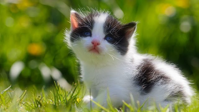 Je Vous Propose Des Magnifique Fonds D Ecran De Chats Et De Chatons En Full Hd Pour Decorer L E Bebes Animaux Mignons Animaux Les Plus Mignons Animaux Heureux