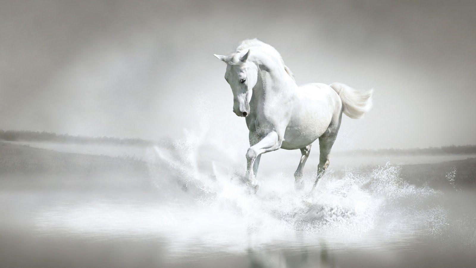 caballos y famosos - Buscar con Google