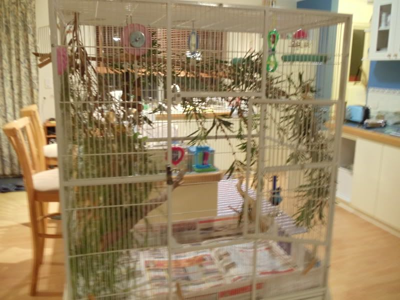 Birds Live Plants In The Cage Talk Budgies Forums Budgies