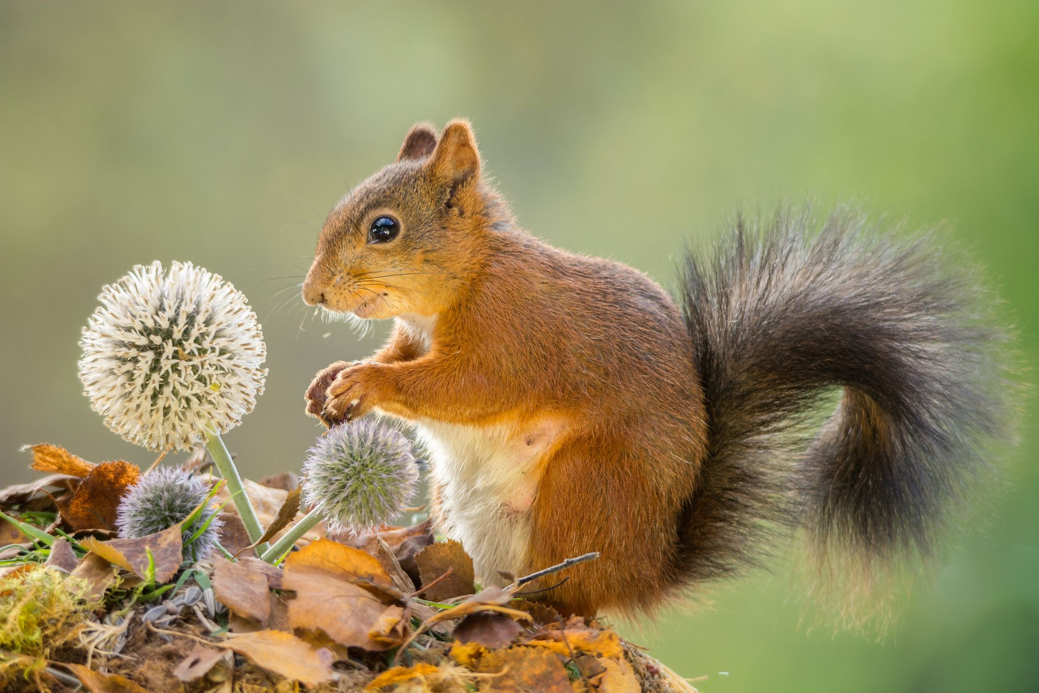 flower wondering by Geert Weggen on 500px