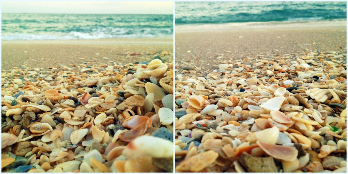 Beach Wall Art Photo Set - Beach Photography Set - Seashells ...