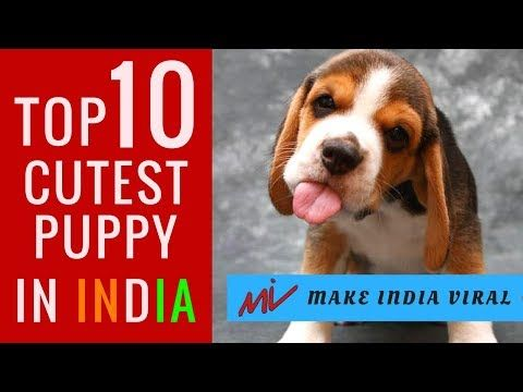 Top 10 Cutest Puppy Dog Breeds In India L Popular Dog Facts Hindi