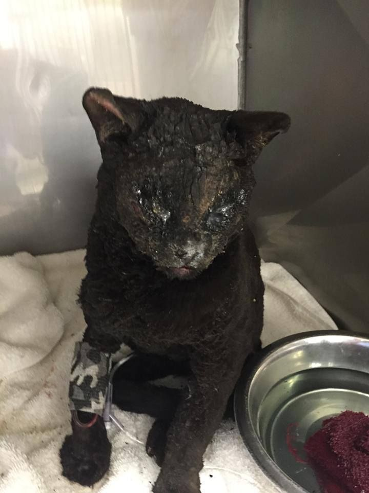 Survivor Cat Emerges As Symbol Of Hope Amid California Wildfire