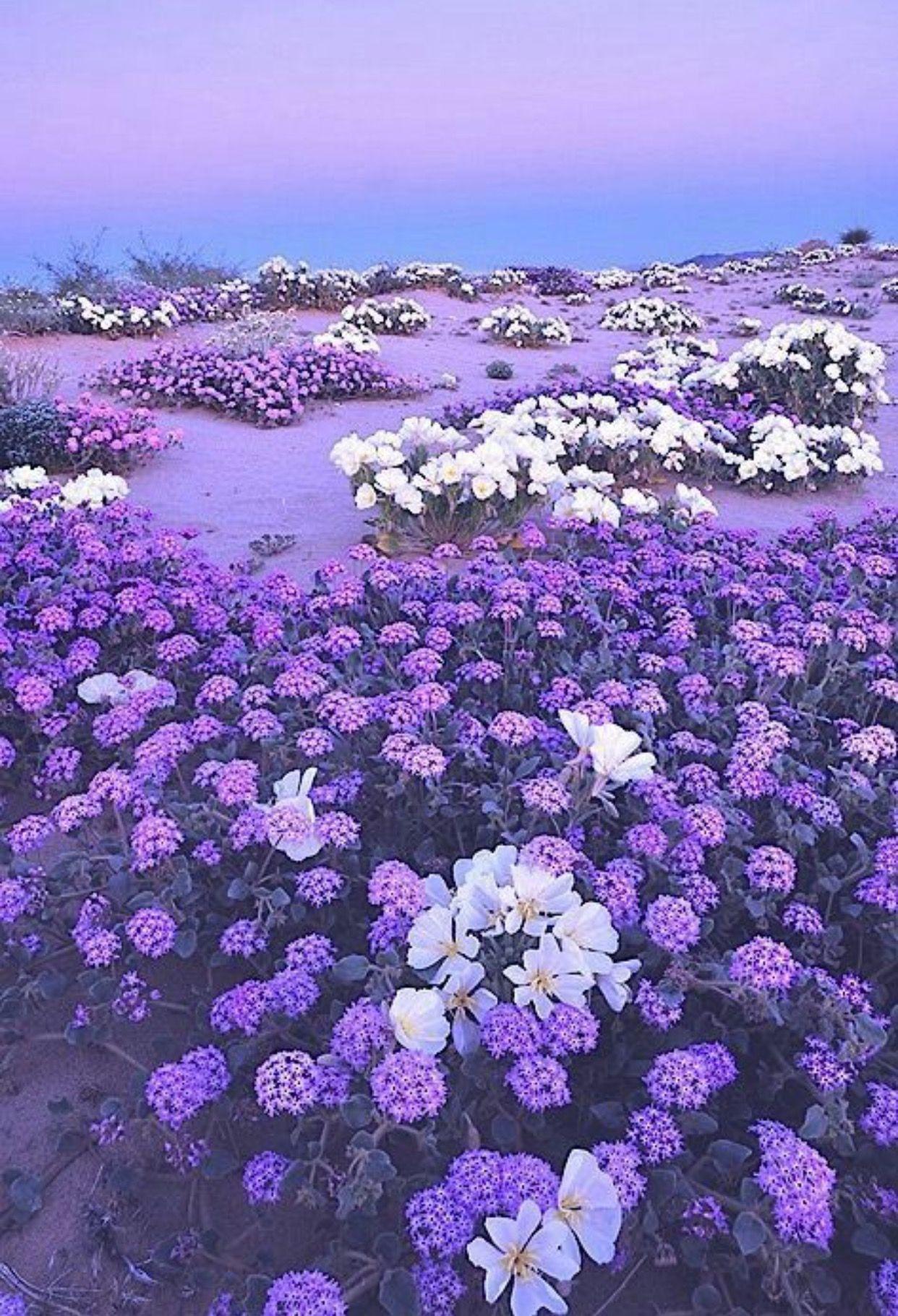 Pin By Carol Serani On Flowers Gardens Pinterest Flowers