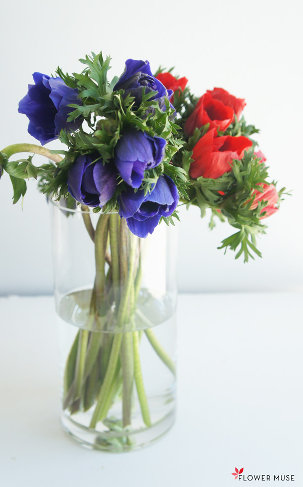 Anemone Flowers Care And Handling Flower Muse Blog In 2020 Anemone Flowers Flower Power