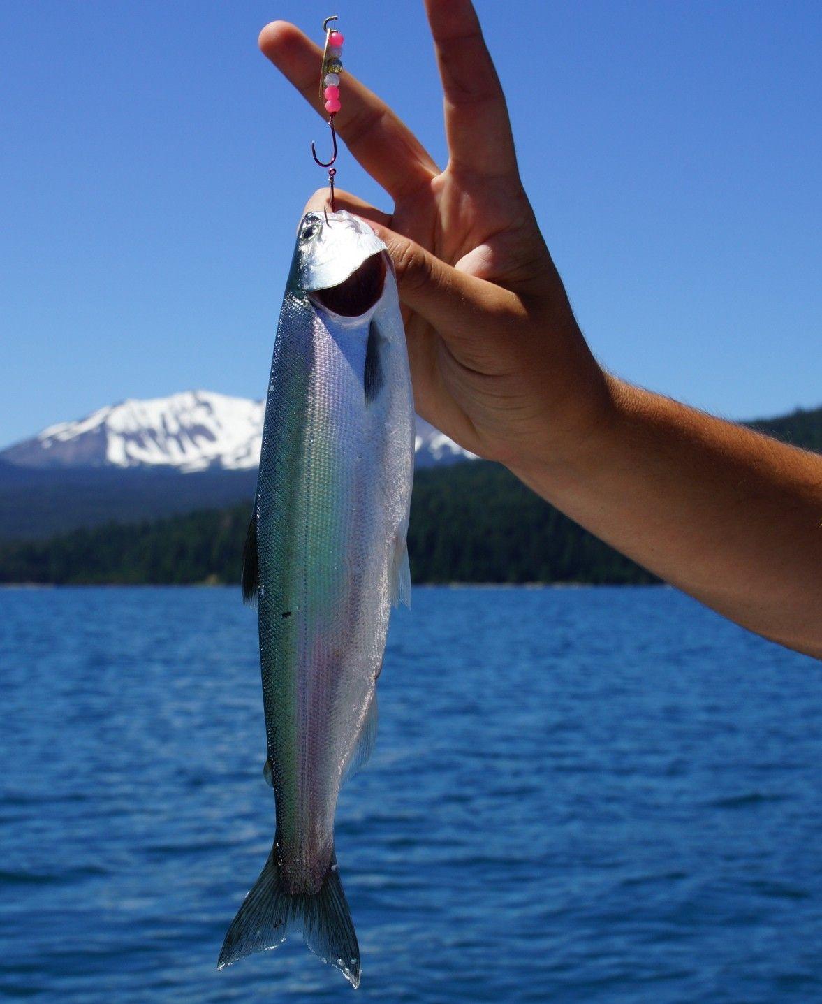 Fishing On Crescent Lake Oregon Crescent Lake Fish Oregon Pictures