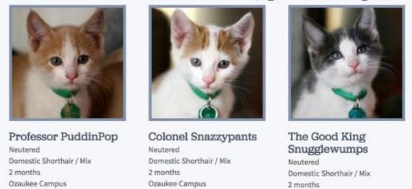 Weird Cat Names Goldenacresdogs