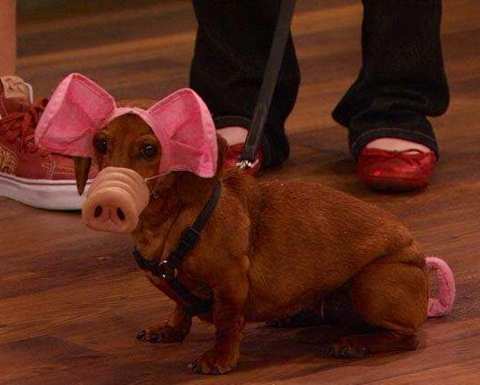 Pig Dog Costume & Pig Dog Costume | Dachshund Obsession! | Pinterest | Dachshunds and Dog
