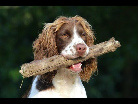 Stonnie Dennis' Cabin Creek Kennel - YouTube | Dog Training | Dogs