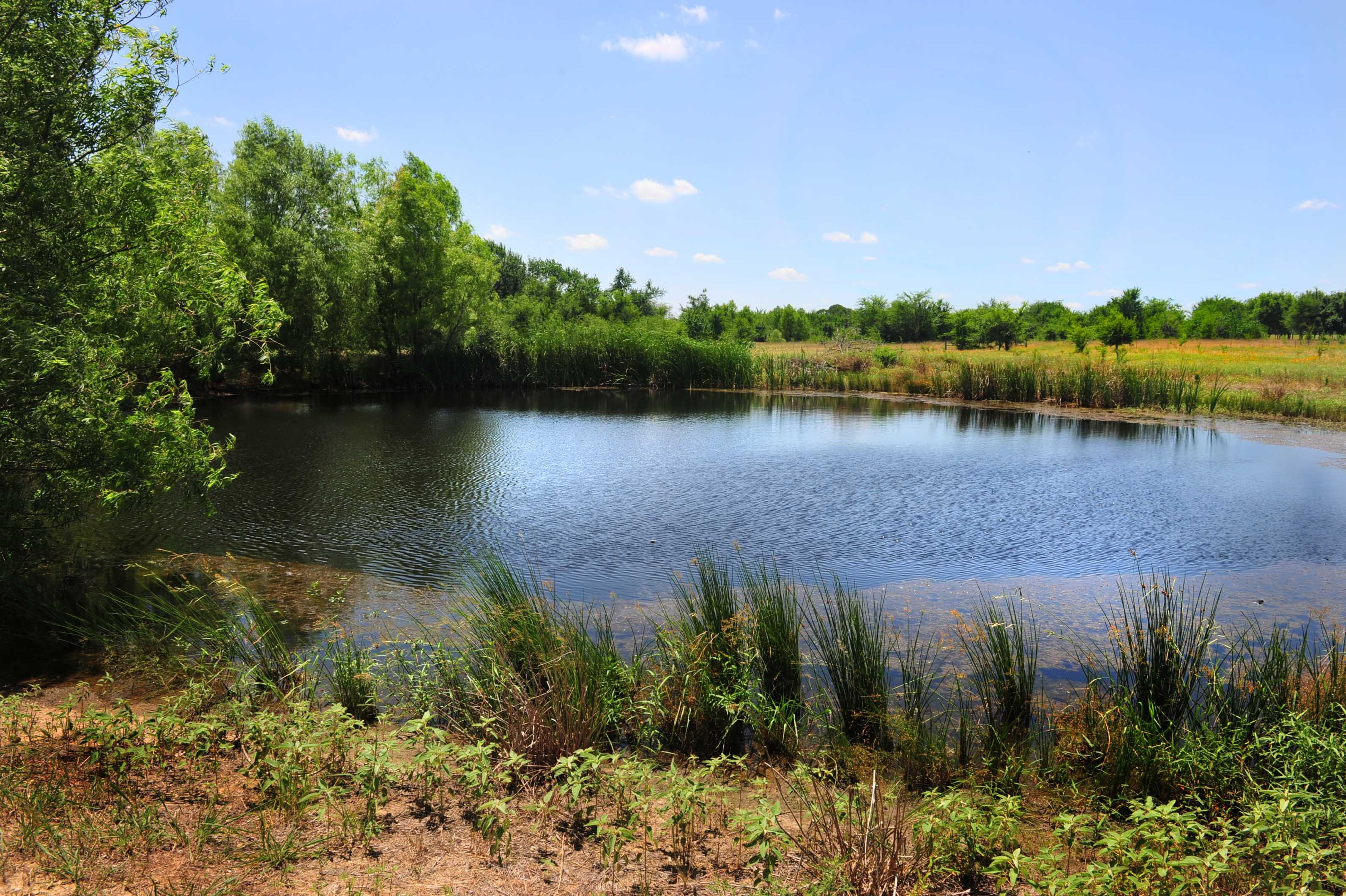 how to make a pond for fishing fish homesteads and farming