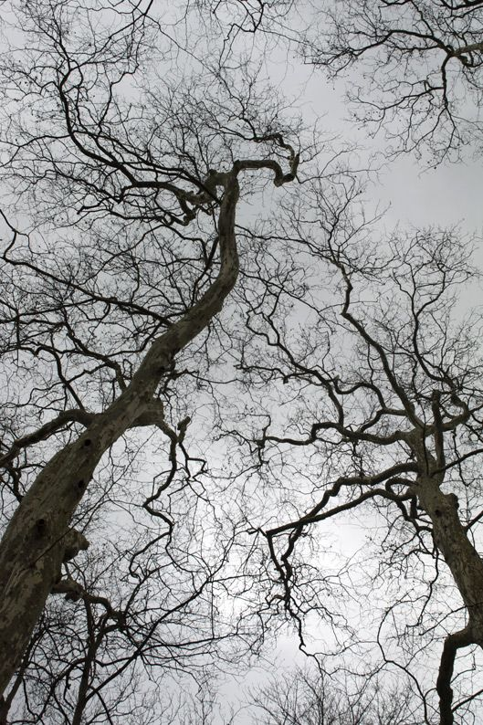 L'arbre Qui Cache La Foret : l'arbre, cache, foret, L'arbre, Cache, Forêt, Association, Double, Arbre,, Foret,, Cachée