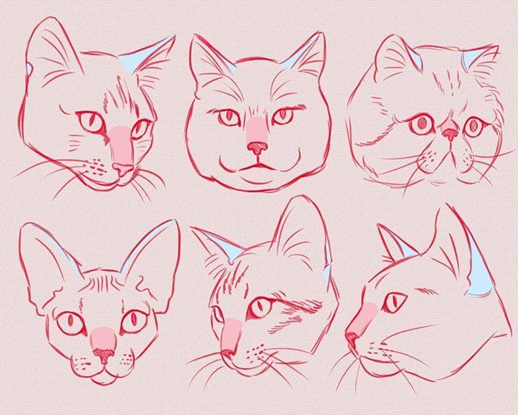 картинки туториалы коты прорыв