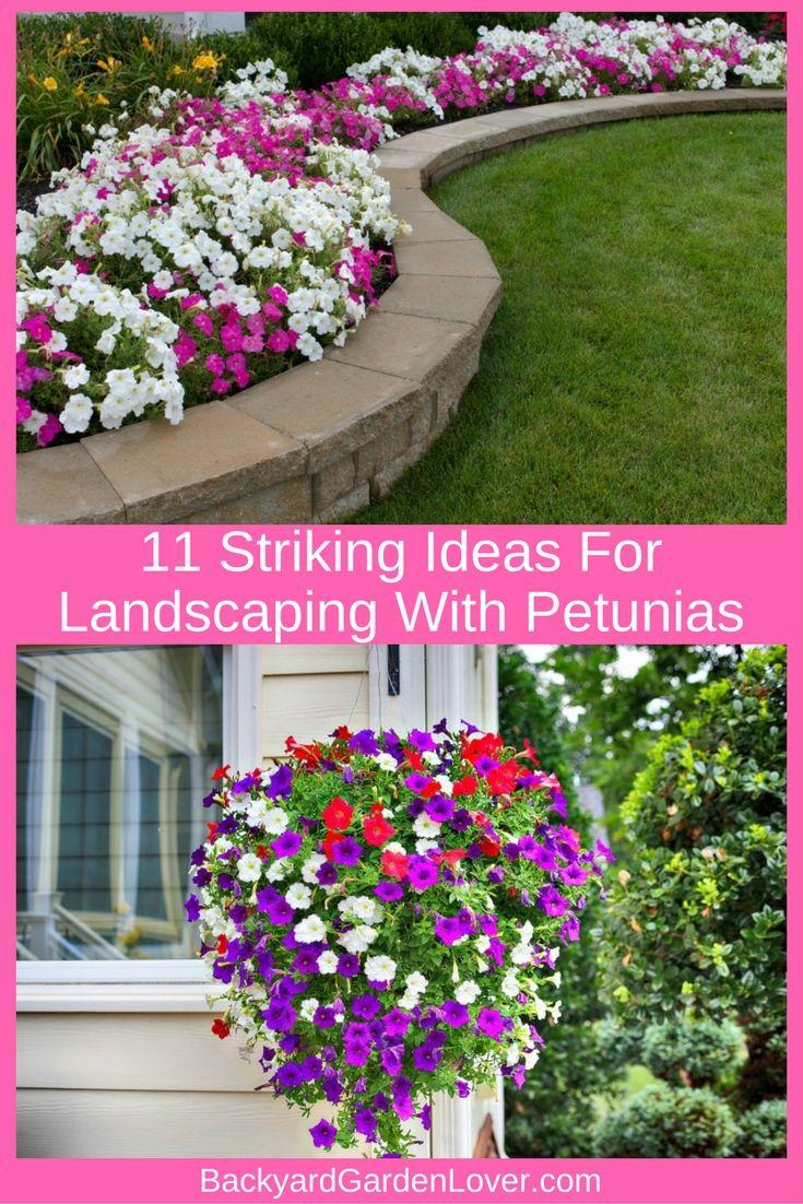 11 Striking Ideas For Landscaping With Petunias | ✿ Backyard Garden ...