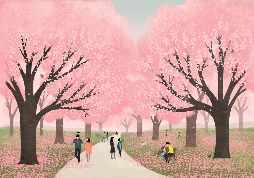 Cherry Blossoms In Japan Art Print By Emilydove X Small Cherry Blossom Japan Japan Art Cherry Blossoms Illustration