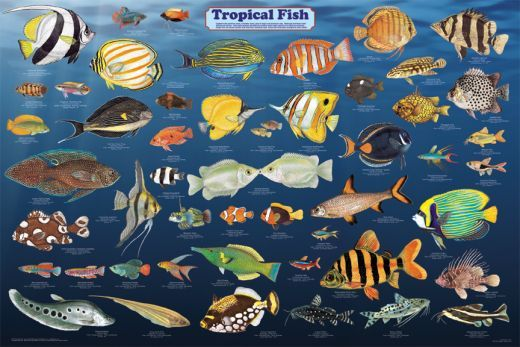 Tropical Fish Species A Few Things To Consider