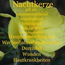 Die Kornblume ~ Ein altes Wundheilmittel #einheimischepflanzen