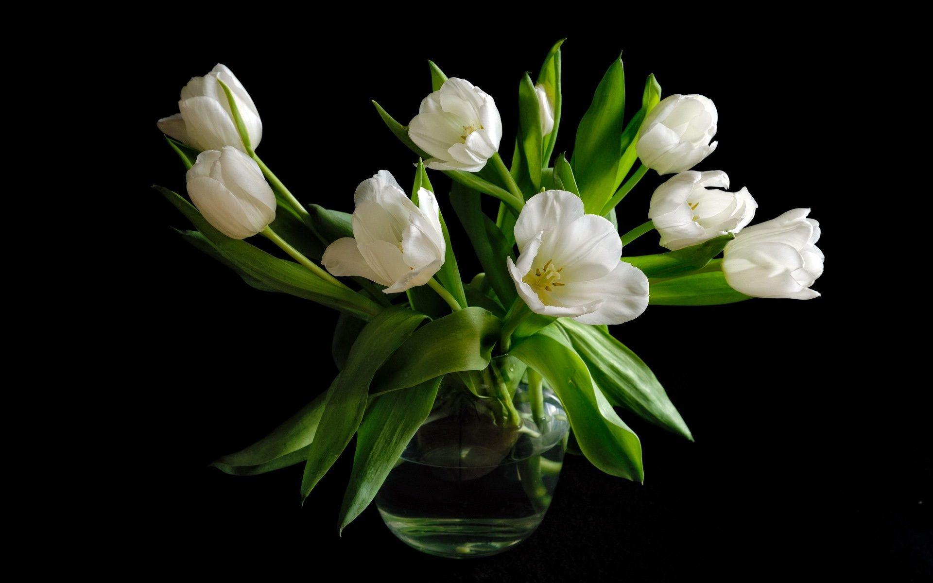 Vase white tulip flowers black background wallpaper cute pinterest