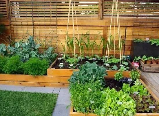 家庭菜園款式參考130例 With Images Backyard Vegetable Gardens