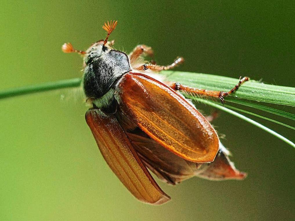 Pin Von Steffi Ophees Auf Insekten2 Insekten