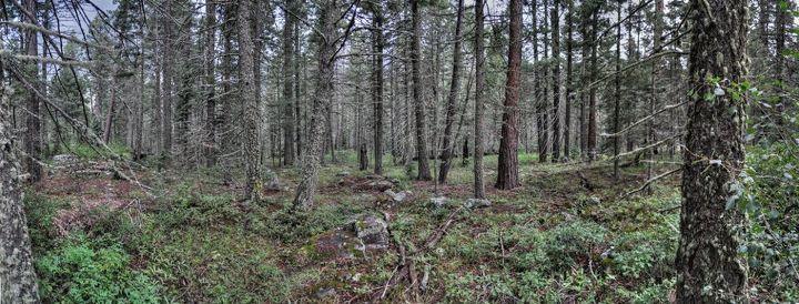 Spring Forest, Vallecito, Colorado - nearby Durango, Colorado - Photo courtesy of 360Durango.com