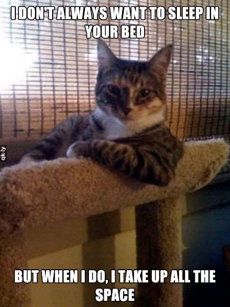 Have you met the most interesting cat in the world? #humor #cats