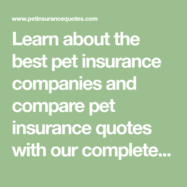 Learn About The Best Pet Insurance Companies And Compare Pet Insurance Quotes With Our Complete Purpose G In 2020 Best Pet Insurance Pet Insurance Pet Insurance Quotes