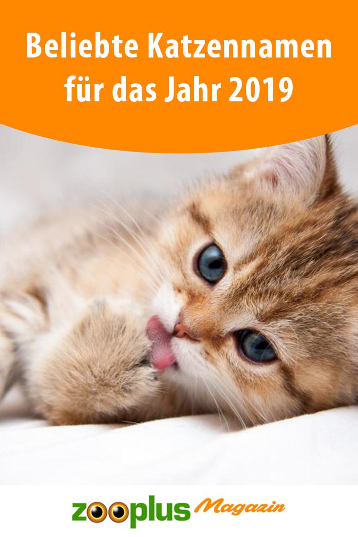 Beliebte Katzennamen Fur Das Jahr 2019 Zooplus Magazin Katzen