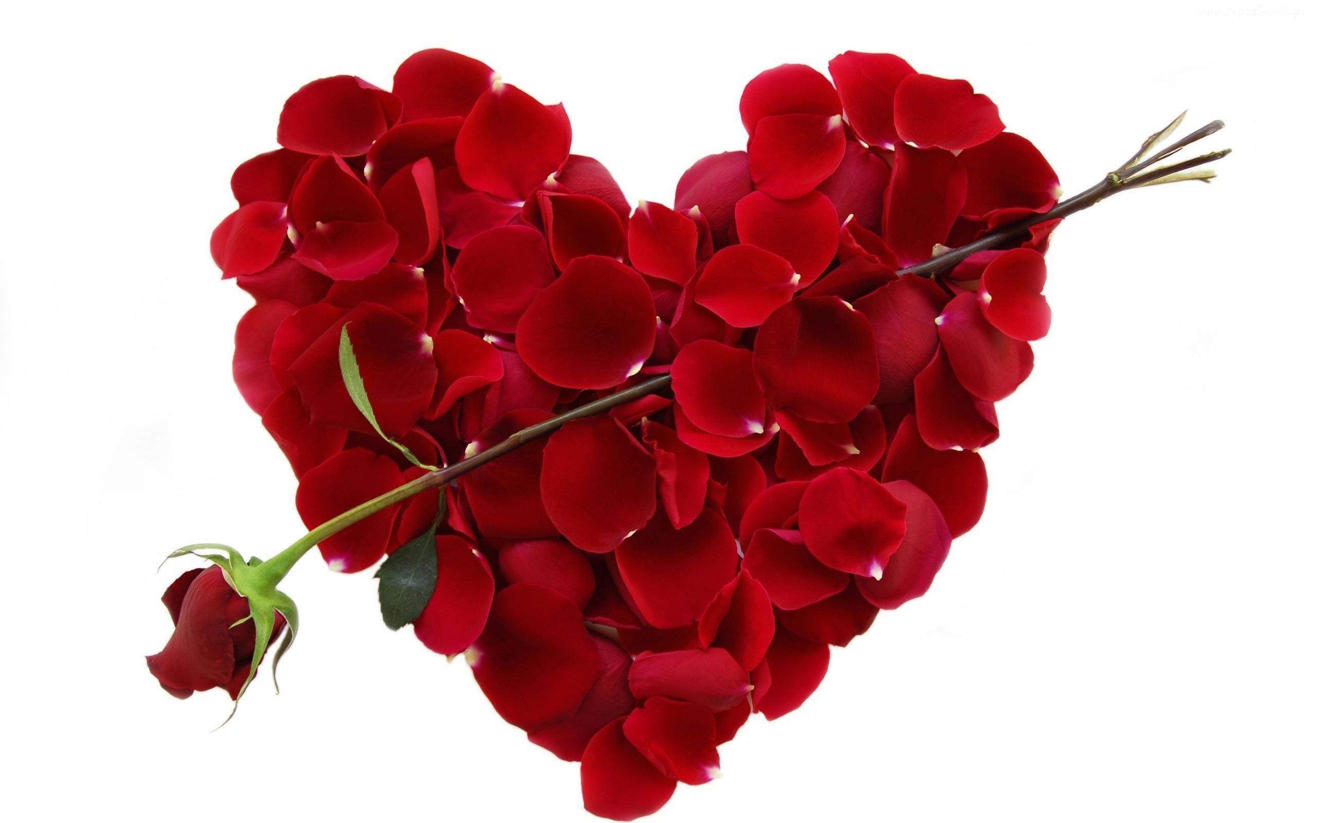 Walentynka Czerwona Roza Platki Serce Love Valentines Valentines Day Wishes Happy Valentines Day