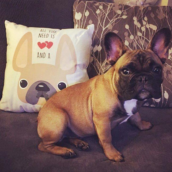 dog イヌ 犬可愛い画像まとめ http://ift.tt/1RYuw85
