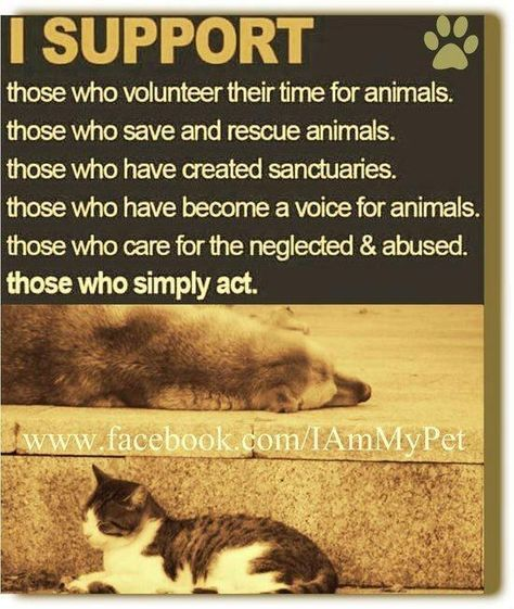 Holly Quinn on Twitter #animalrescue
