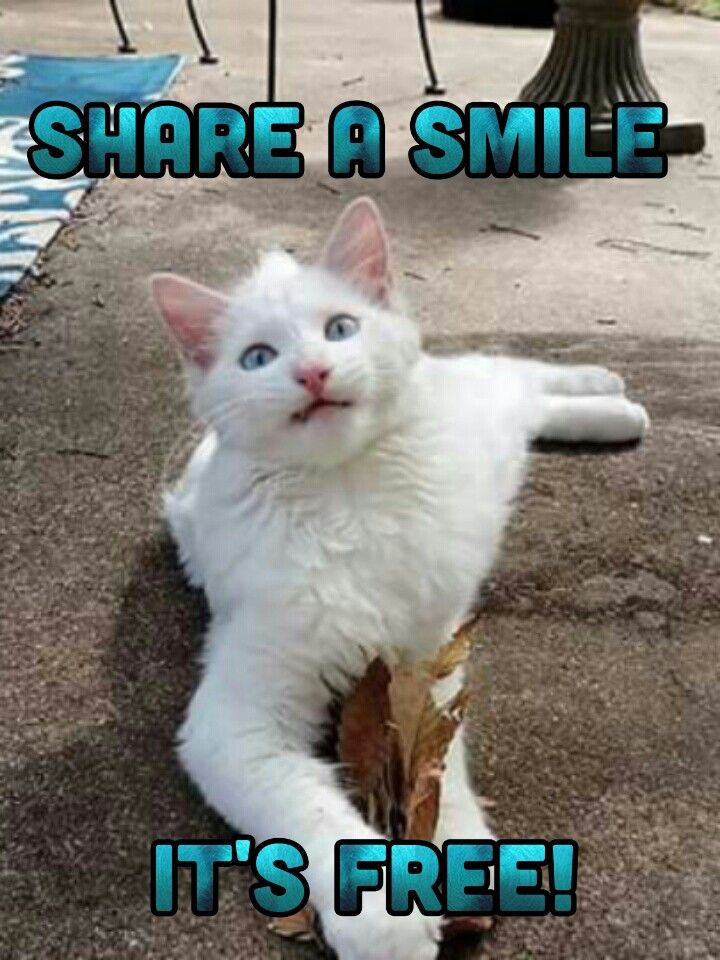 Funny Cats Cat Quotes Funny Funny Animal Jokes Funny Cat Memes
