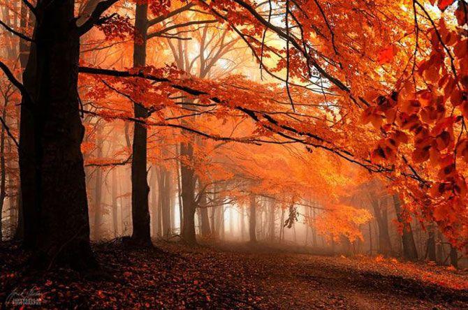 Волшебный мир Карпат: изумительно красивые фотографии осеннего леса