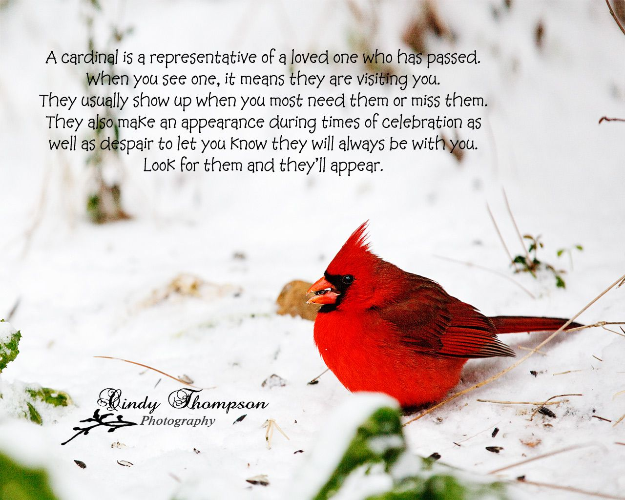 "The Red Birds have a special meaning …  ""Cardinals"