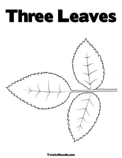 rose leaves coloring page vicki smallwood smallwood judge good printable for rose napkin use only top leaf and dont make edges