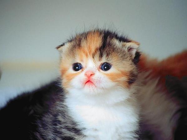 Download 100+  Gambar Kucing Terimut Terbaik