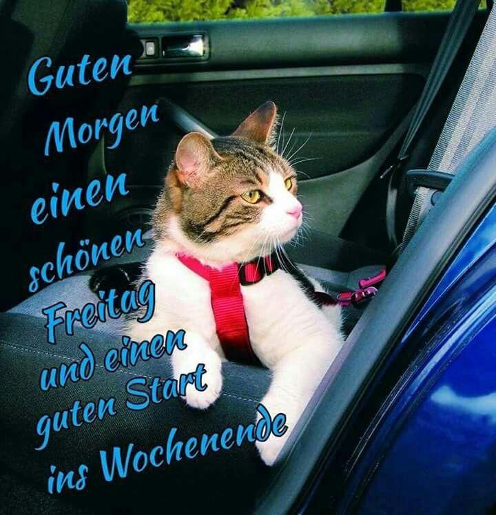 Katzen Bilder Mit Bildern Guten Morgen Freitag Guten Morgen