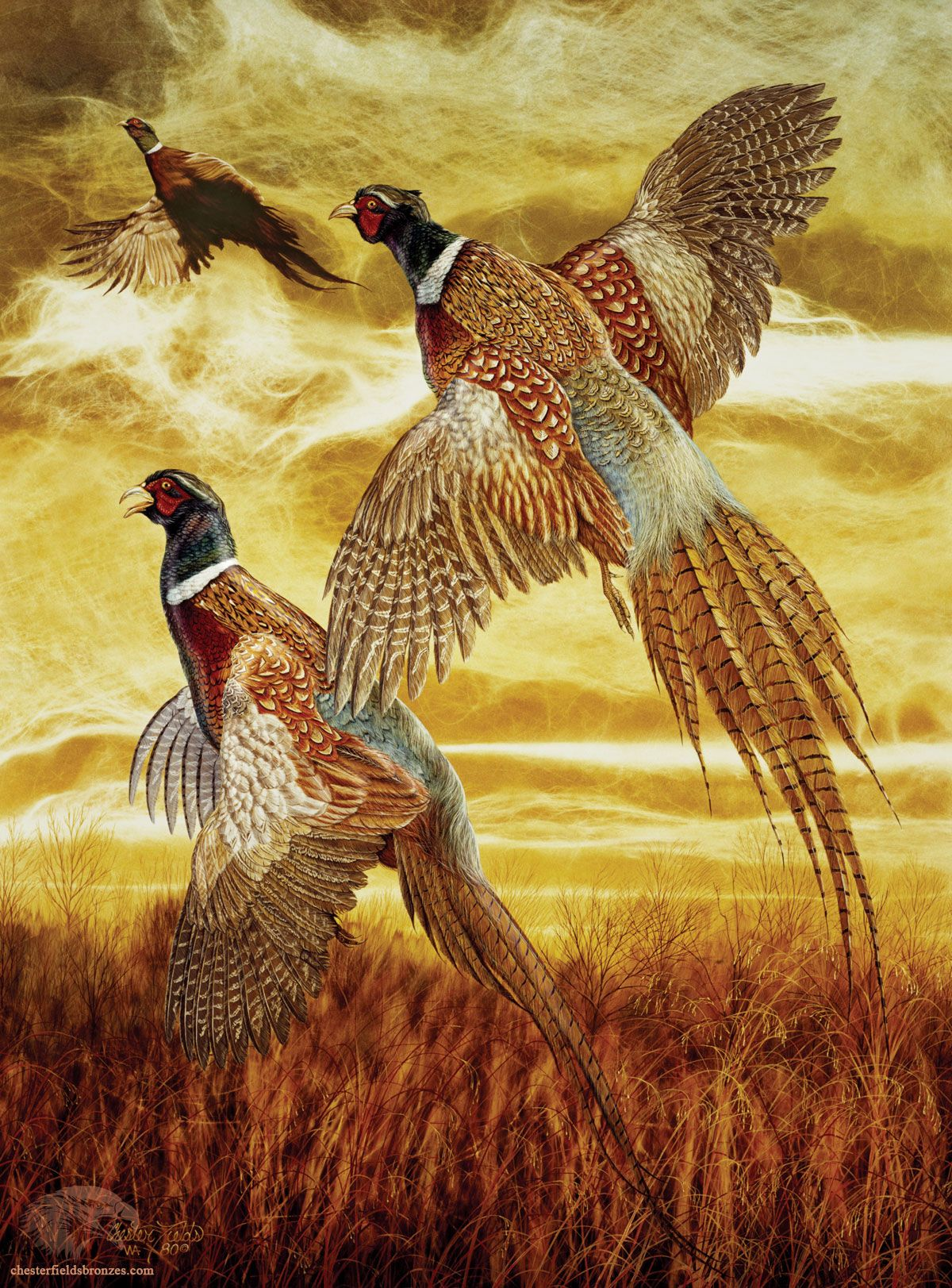 pheasants in flight flushed by chester fields amimals of the