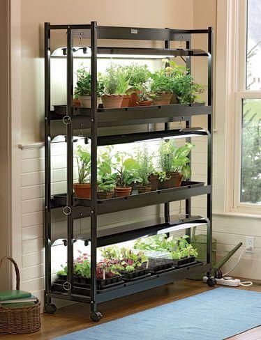 Need Indoor Growing Setup Plantsgardenfarming Garden